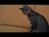 Руководство для кошек по уходу за людьми